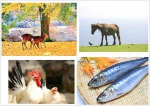 鹿と馬と鶏と魚の画像