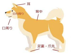 犬の食物アレルギーが出やすい箇所のイラスト画像