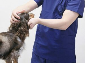 獣医の画像