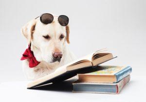 読書をするラブラドールレトリバーの画像