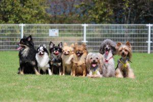 犬の全員集合写真