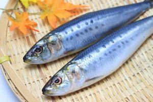 魚(イワシ)の画像
