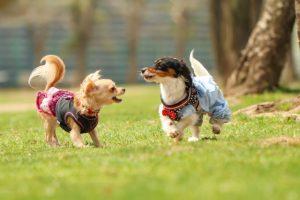 遊ぶ犬の画像