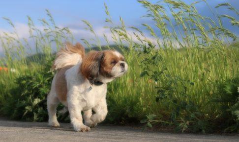 散歩をする犬の画像