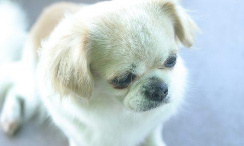 愛犬元気『13歳以上用』を徹底評価|シニア犬の口コミ・評判
