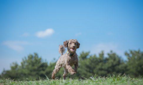走り回る犬の画像
