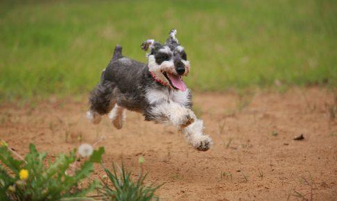 嬉しそうに走る犬の画像