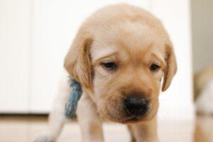 不安そうな犬の画像