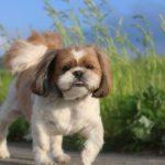 散歩する犬の画像