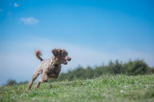 草原を走り回る犬の画像