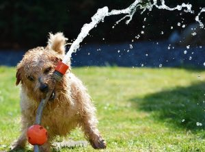 ホースで遊ぶ犬の画像