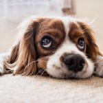 寝そべっている犬の画像
