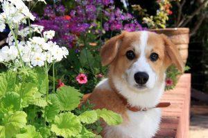 コチラを見つめる犬の画像