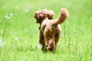 犬のおしりの画像