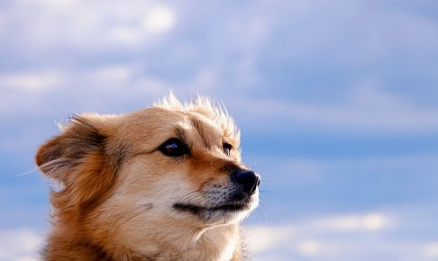 風をあびる犬の画像
