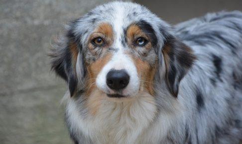 こちらを見ている犬の画像