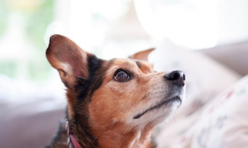 上を見上げる犬の画像