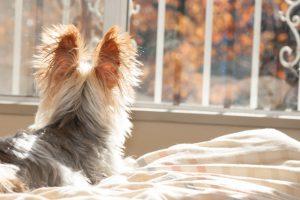 犬の耳の画像