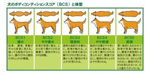 BCS(ボディコンディションスコア)の画像