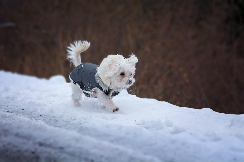 雪の中で遊ぶ犬の画像