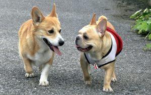 仲良しの2匹の犬の画像