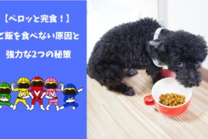 これでペロッと完食!犬がご飯を食べない6つの原因と強力な2つの秘策