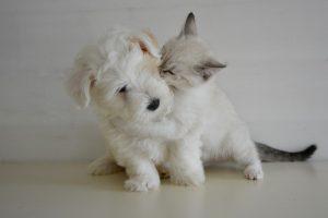 子犬と猫がじゃれあっている画像