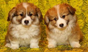 2匹の子犬の画像
