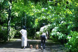 犬を散歩している画像