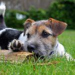 芝生に寝転がる犬の画像