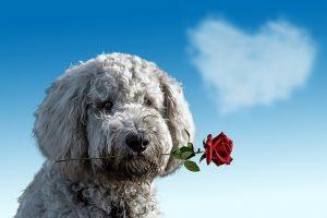 青空のしたでバラをくわえる犬の画像