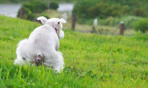 うんちを踏ん張る犬の画像