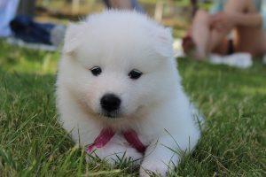 毛並みの良い子犬の画像