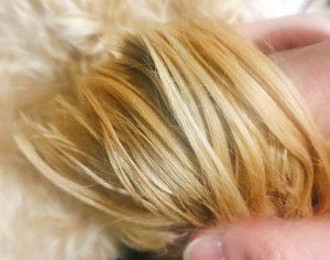犬の毛艶の画像