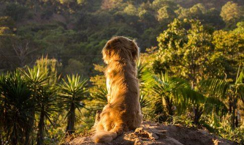 毛艶の良い犬の画像