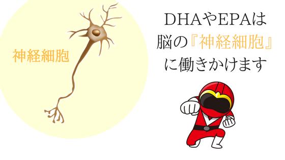 神経細胞とDHAやEPAの関係イラスト