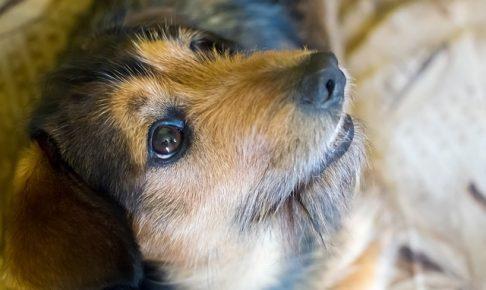 見上げる犬の画像