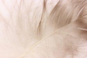 茶色い羽根の画像