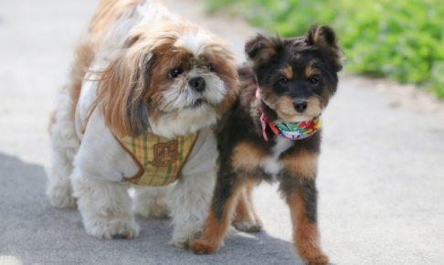 仲良しの2匹の犬