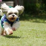 走る犬の画像