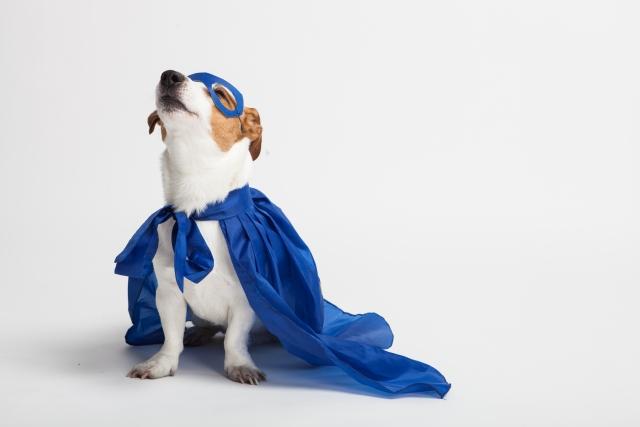 ヒーローマントをつけた犬の画像