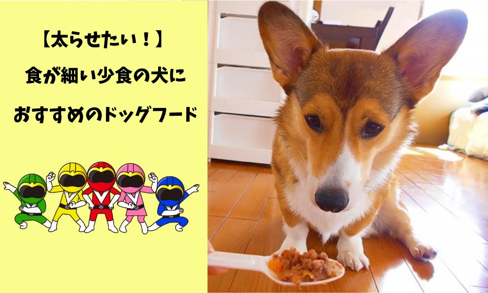 少食だけど太らせたい!食が細い少食の犬におすすめのドッグフードはコレ!