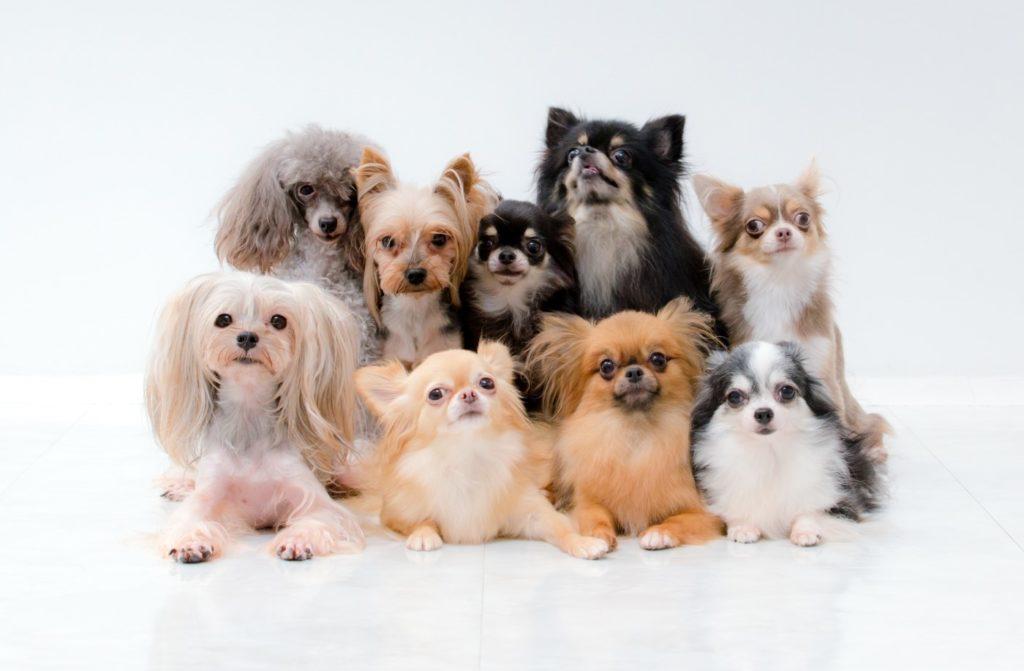 犬の集合写真