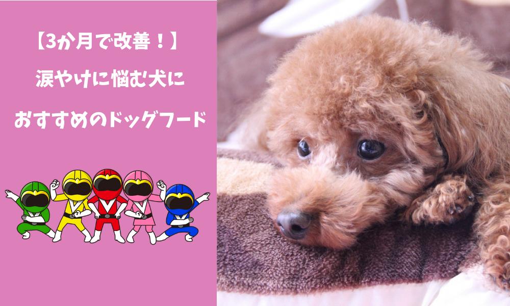 【3か月】愛犬の涙やけとの戦いを制したドッグフードブログはここです
